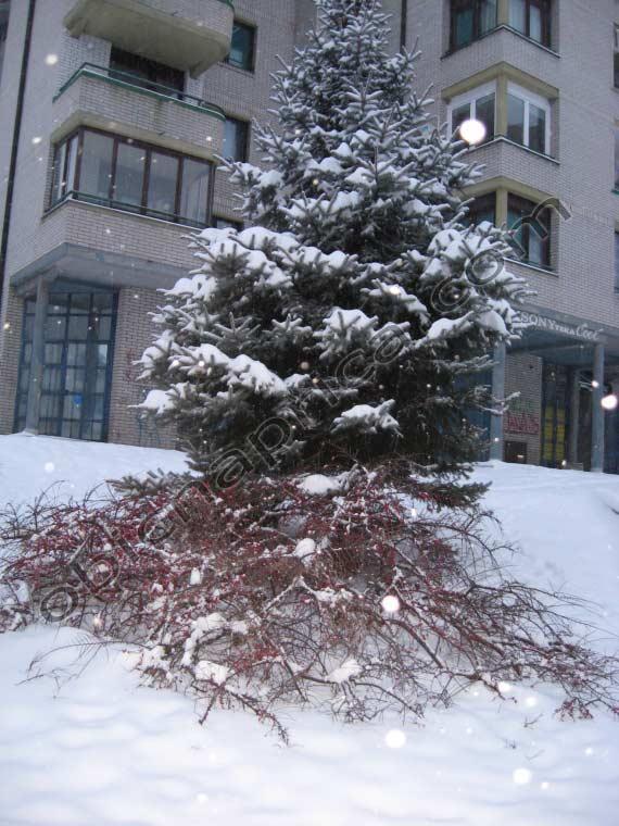 Zima u komšiluku